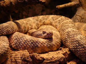 Texas Man's House Nesting Ground for Snakes